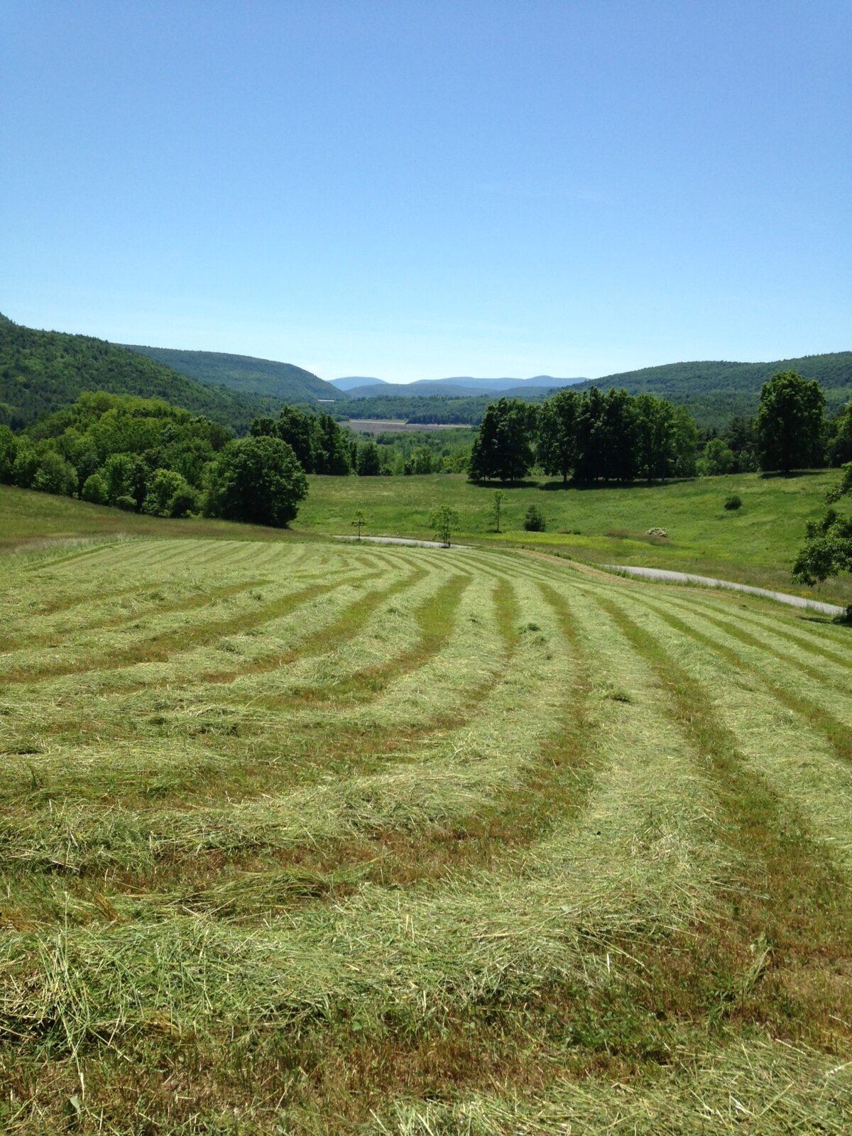 Nansoap of Meeting Land Farm